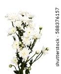 bouquet white chrysanthemums... | Shutterstock . vector #588376157