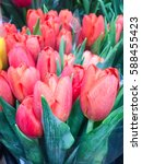 Red Tulips Flower On Display A...