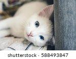 Stock photo kitten 588493847