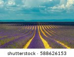 lavender field  provence  france | Shutterstock . vector #588626153