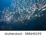 fish school of scad fish in... | Shutterstock . vector #588640193