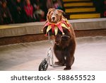 circus bear on speech. | Shutterstock . vector #588655523