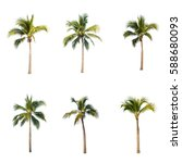 coconut trees on white... | Shutterstock . vector #588680093