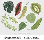 engraved  hand drawn tropical... | Shutterstock .eps vector #588735053