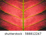 Abstract Red Striped Of Foliag...