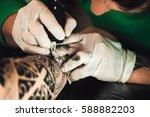 master tattoo artist in gloves... | Shutterstock . vector #588882203