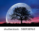 Lone Tree With Moon At It...