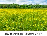 yellow flowers on meadow ... | Shutterstock . vector #588968447