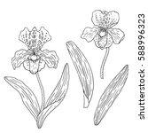 orchids venus shoe. hand drawn... | Shutterstock .eps vector #588996323