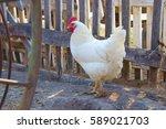 White Chicken. Prekrastny...