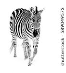 a grant's zebra walking in the... | Shutterstock . vector #589049573