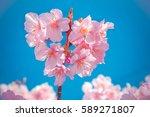 Heart Of Pink Sakura  The Most...