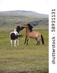 Two Icelandic ponies play fighting against a mountainous background
