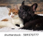 cat and dog together. cute pets.... | Shutterstock . vector #589370777