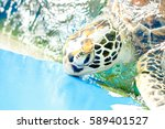 Close Up Crop Of Hawksbill Sea...