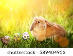brown rabbit and colorful egg... | Shutterstock . vector #589404953
