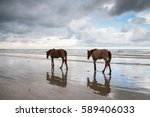 Two Horse Play At The Seaside...
