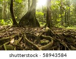 Old Tropical Forest With Ray O...