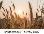 Flower Grass Silhouette...
