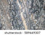 Small photo of outer bark