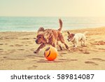 dog breed cocker spaniel and... | Shutterstock . vector #589814087