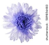 white violet  flower... | Shutterstock . vector #589856483