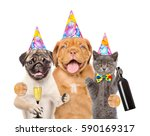 group of pets in birthday hat... | Shutterstock . vector #590169317
