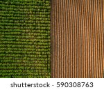 aerial view   rows of soil... | Shutterstock . vector #590308763