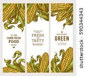 corn on the cob vintage banners ... | Shutterstock .eps vector #590344343