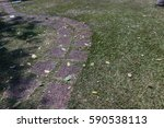 the stone block walk path in... | Shutterstock . vector #590538113
