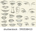 facial features. design set.... | Shutterstock .eps vector #590538413