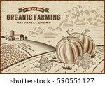 pumpkin organic farming... | Shutterstock .eps vector #590551127
