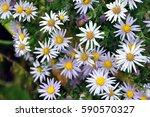 flowers | Shutterstock . vector #590570327