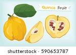 quince fruit vector   Shutterstock .eps vector #590653787