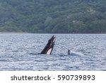 seen from a boat in culebra bay ...   Shutterstock . vector #590739893
