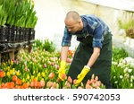 florists man working with... | Shutterstock . vector #590742053