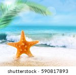 starfish on a sandy beach near... | Shutterstock . vector #590817893