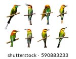 group of birds on branches on...   Shutterstock . vector #590883233