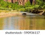 zion national park is a... | Shutterstock . vector #590936117