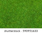 beautiful green grass pattern... | Shutterstock . vector #590951633