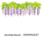 The Wisteria Flower Vine...
