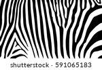 background stripe animals... | Shutterstock .eps vector #591065183