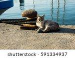 Squinting Beach Cat Lying Near...