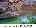 chidorigafuchi park during the... | Shutterstock . vector #591438587