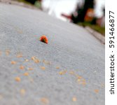The Abandoned Flower On The...