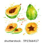 watercolor illustration of... | Shutterstock . vector #591566417
