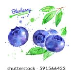 watercolor illustration of... | Shutterstock . vector #591566423