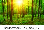 forest with sunlight. the sun...   Shutterstock . vector #591569117