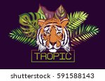 tropic text. card with a... | Shutterstock .eps vector #591588143