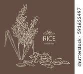 background with rice  plant and ...   Shutterstock .eps vector #591633497